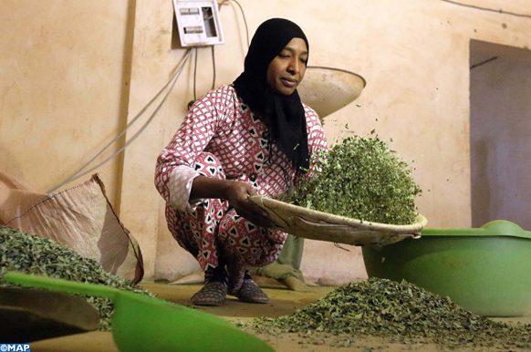 Atlas Saghir-appel à passer à l'agriculture biologique