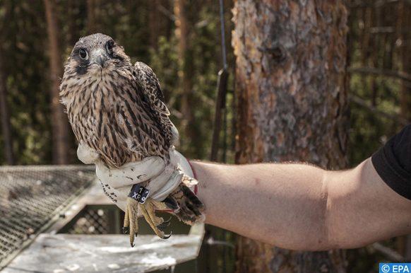 nourriture destinées aux animaux et oiseaux des forêts