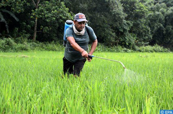 pesticide(1)