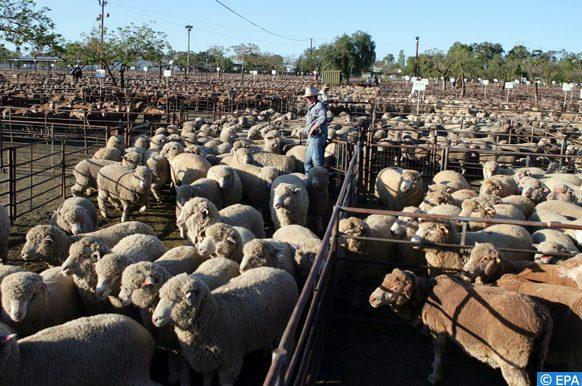 Les changements climatiques réduisent la rentabilité des fermes australiennes.