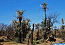 milieu oasien