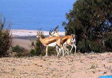 تنظيم ندوة بمدينة طاطا حول دور المناطق الرطبة في حماية المنظومات البيئية
