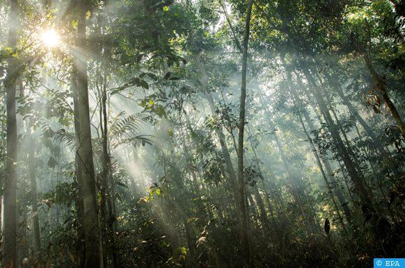 تعبئة 7 ملايين درهم لإحداث أحزمة خضراء وتهيئة غابة حضرية بميسور