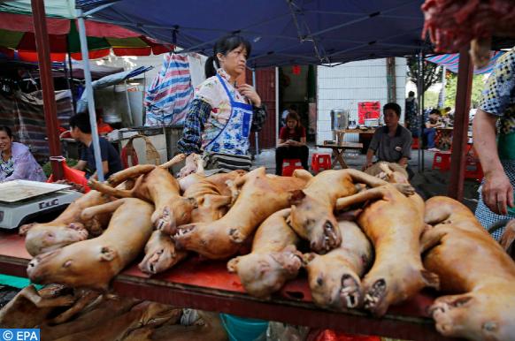 les chiens et les chats ne seront plus des animaux comestibles en Chine