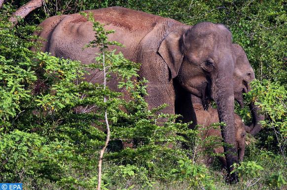 l'éléphante Mara